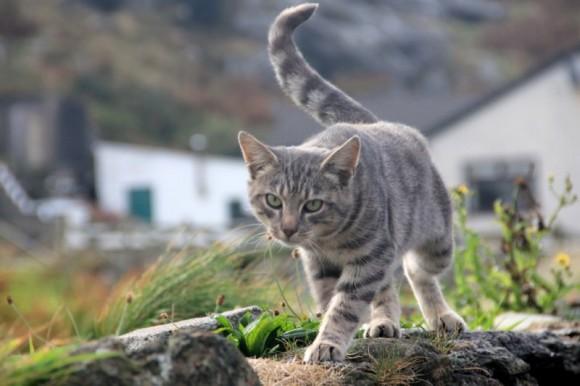 Katze im Museumsdorf